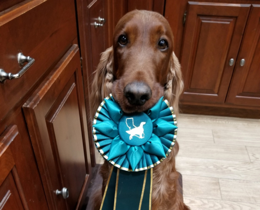 I won a ribbon today