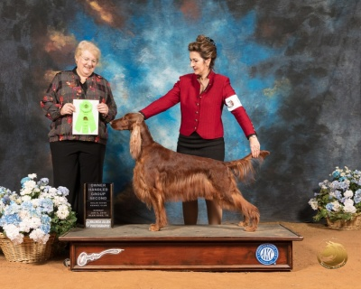 Owner Handler Sporting Group 2